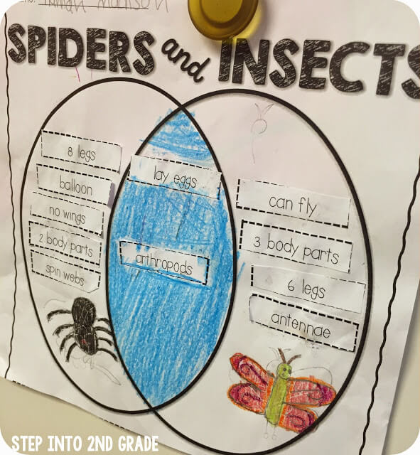 Spider fun step into 2nd grade step into 2nd grade ccuart Choice Image