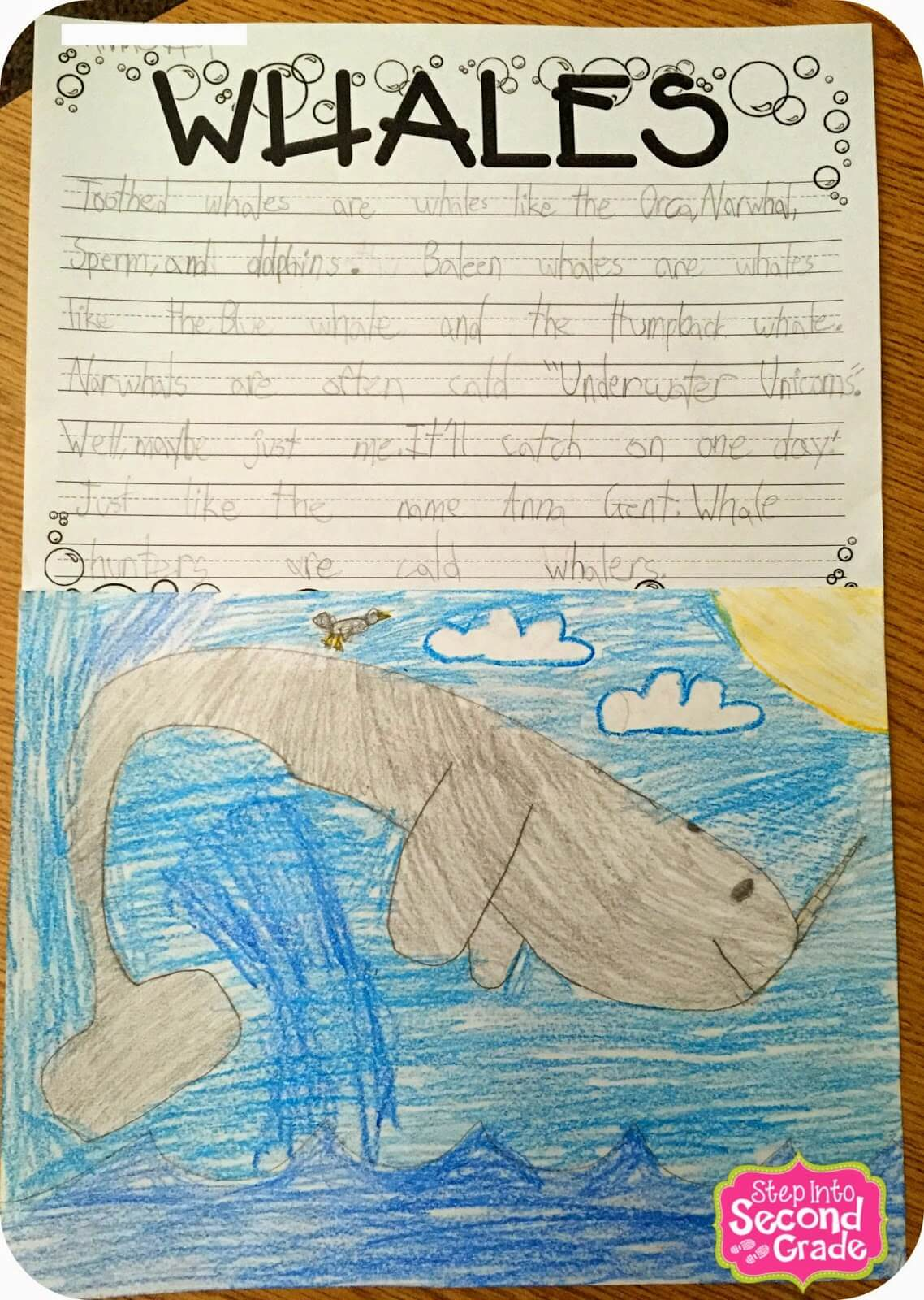 whales whales and more whales step into 2nd grade