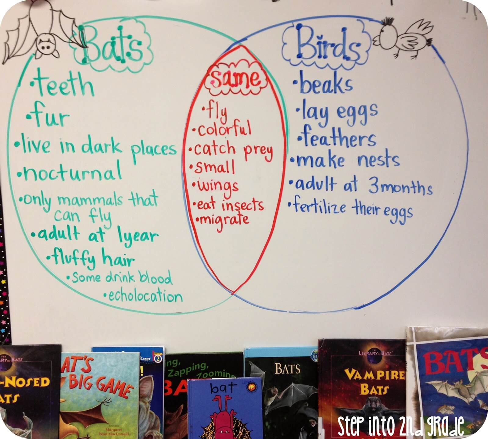 My kids were over the moon in love with this next activity! I displayed  Erica's Bat Diagram on the projector, and my students drew, colored, and  labeled the ...